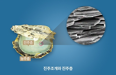 화공 차형준 교수팀, 바다의 보석 '진주' 형성 비밀 찾았다