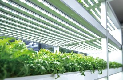 2018 여름호 / 지식더하기 Ⅱ / 식물 생장과정의 중요 요소 식물호르몬