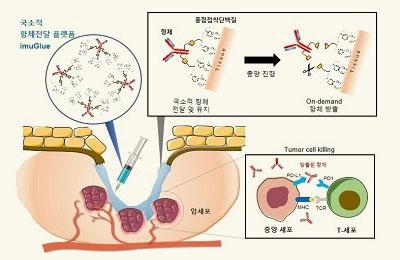 화공 차형준 교수팀, 홍합이 항체와 만나 암을 치료한다